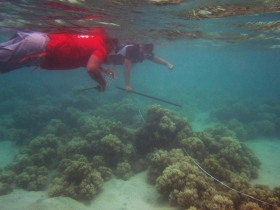 monitoring soft coral